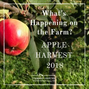 harvest day 2018 common ground alaska farm orchard apples
